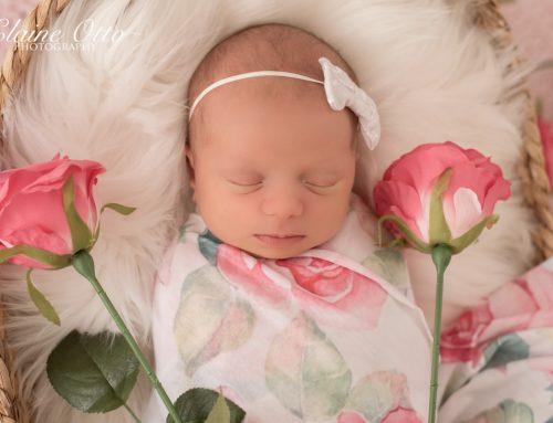 Ewilina newborn