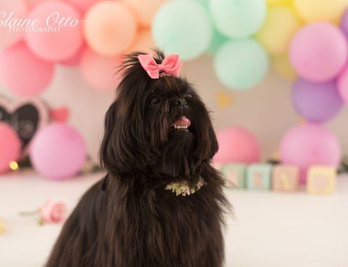 Inka | First birthday shoot